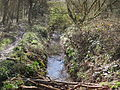 Crofton Wood, Kyd Brook.JPG