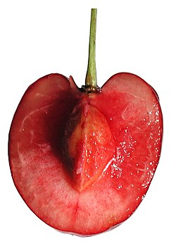 Cross-section cherry.jpg