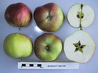 Cross section of Bramshott Rectory, National Fruit Collection (acc. 1957-273).jpg