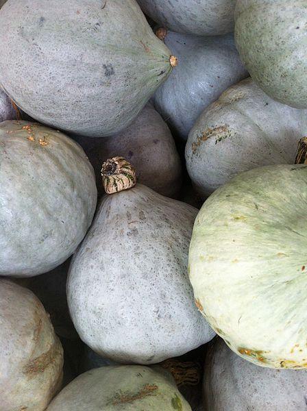 File:Cucurbita maxima blue Gourds.jpg
