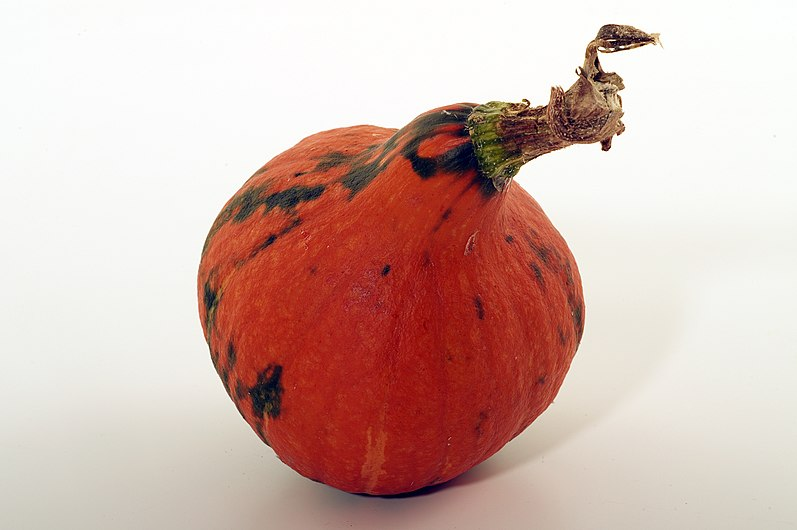 Cucutbutacée comestible (POTIMARRON)Cl J Weber08 (23677323755).jpg