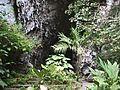 Cueva del Guacharo 06.jpg