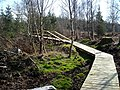 Cycle Trail in Dalbeattie Forest - geograph.org.uk - 392765.jpg