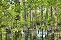 Cypress-swamp-medabpan.com (7352137068).jpg