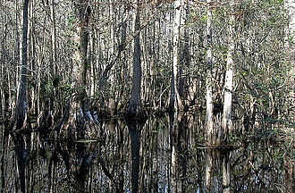 Highlands Hammock State Park - Image: Cypress Swamp