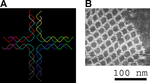 DNA nanostructures.png