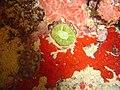 DSC00181 - recifes de coral - Naufrágio e recifes de coral no Nilo.jpg