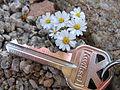 Daisy desertstar (Monoptilon bellidiforme); North Entrance (12525688835).jpg