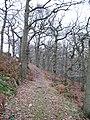 Dallowgill oakwoods - geograph.org.uk - 634806.jpg