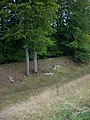 Danebury Ring - Defensive Ditch - geograph.org.uk - 936240.jpg