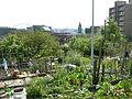 Danny Woo Community Garden 10.jpg