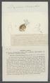 Daphnia sima - - Print - Iconographia Zoologica - Special Collections University of Amsterdam - UBAINV0274 099 06 0010.tif