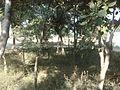 Darbar Faizan e Qalander , Syed Qaiser Shah , Kot Nabi Shah Phalia - panoramio (19).jpg