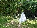 Dart river 2018 3.jpg