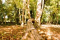 Deadwood lying in the sunshine - geograph.org.uk - 1512478.jpg