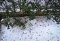 December Eleven - panoramio.jpg