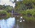 Decoy pond - geograph.org.uk - 1348821.jpg