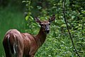 Delafield, WI, USA - panoramio - NaturesFan1226 (3).jpg