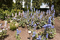 Delphinium bed in Queen Mary's Garden IMG 4423.jpg