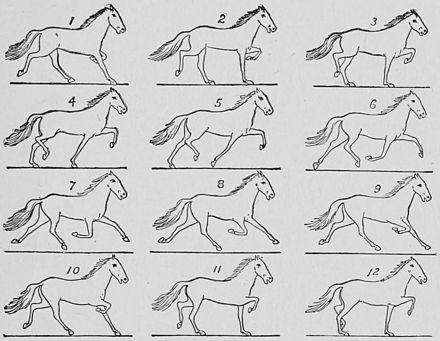 SOME CONSECUTIVE PHASES OF THE TROT.