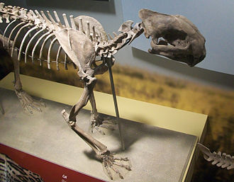 Dinictis - Skeleton in the Field Museum of Natural History
