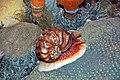 Diorama of a Devonian seafloor - gastropod, corals, algae 3 (30717353107).jpg