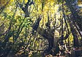 Dirfi, forest sun rays.jpg