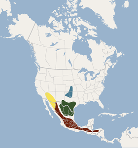 Distribution of Myotis velifer.png