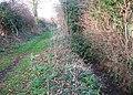 Ditch beside bridleway to Mangreen - geograph.org.uk - 1602951.jpg
