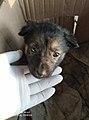 Dog at zia veterinary and pets clinic.jpg