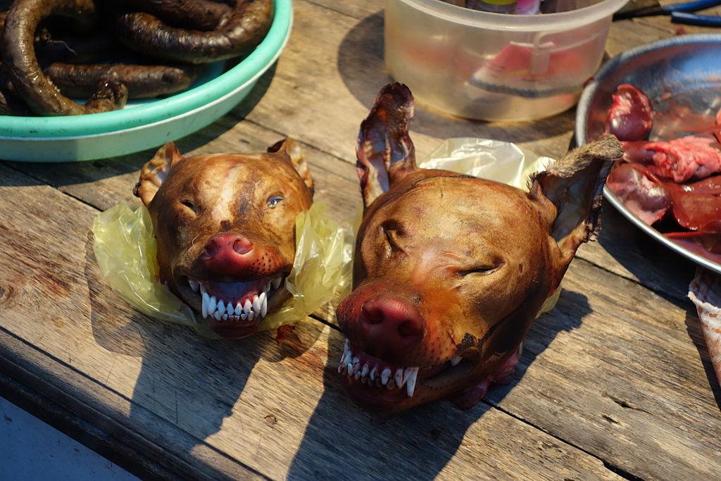 consommation de chiens dans le monde