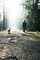 Dog walking in Florence.jpg