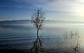 Dojran Lake 183.jpg