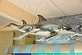 Dolphin - Fibreglass Statues - Bardhaman Science Centre - Bardhaman 2015-07-24 1309.JPG