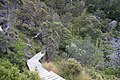 Dove Lake Circuit Walking Track, Cradle Mountain - Lake St Clair National Park 51.jpg