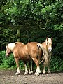 Draft Horses - geograph.org.uk - 547731.jpg