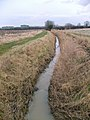 Drain - Mayflower Woods - geograph.org.uk - 663722.jpg