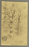 Drawing, Two trees, 1877 (CH 18192123).jpg