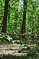 Dubechne Starovyzhivskyi Volynska-Modryna nature monument botanical-guard board.jpg