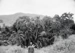 ETH-BIB-Mann vor Palmengebüsch-Kilimanjaroflug 1929-30-LBS MH02-07-0465.tif