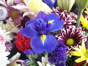A flower from a bouquet at the Eastern Market ...