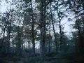 File:Eikeloogst werpt vruchten af dankzij mechanisatie in bosbouw Weeknummer, 76-46 - Open Beelden - 13449.ogv
