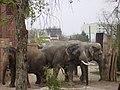 Elefanten im Leipziger Zoo - panoramio.jpg