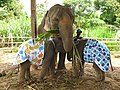 Elephants in diapers.jpg