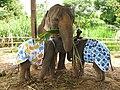 Elephants in diapers.jpg