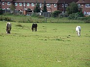 Eltham parks 1