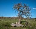 Entzia - Legaire - Menhir de Akarte -BT- 01.jpg
