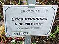 Erica mammosa sign.jpg