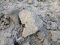 Ethiopie-Danakil-Fossiles (6).jpg