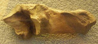 Eucladoceros - Eucladoceros ctenoides heel bone